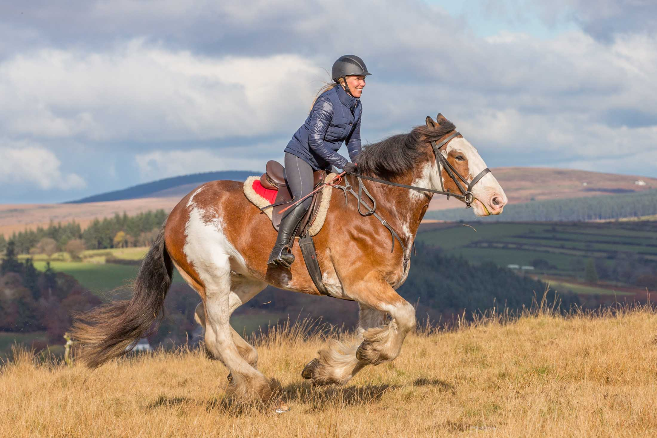 About Us Adventure Clydesdale